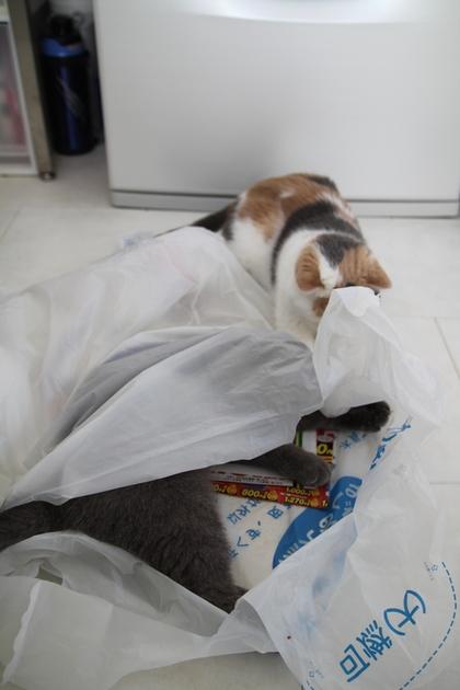 ゴミ袋の中と外でガサガサ