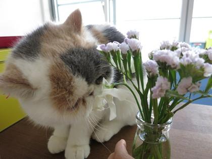 お花良い香り?