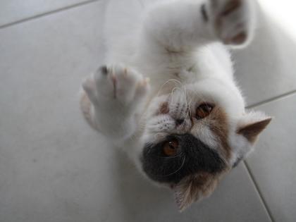 手を伸ばす~~~!