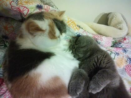 最後はこんな風に寝てました