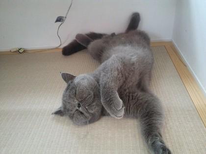 猫らしく寝る前
