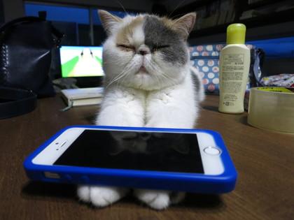 iphoneのせ