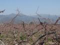 4月8日の桃畑