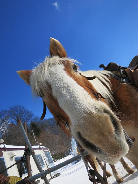 千歳・支笏湖 氷濤まつり 馬