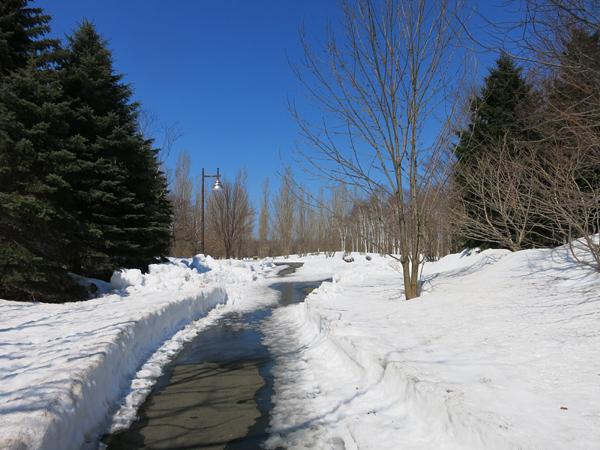 前田森林公園 雪