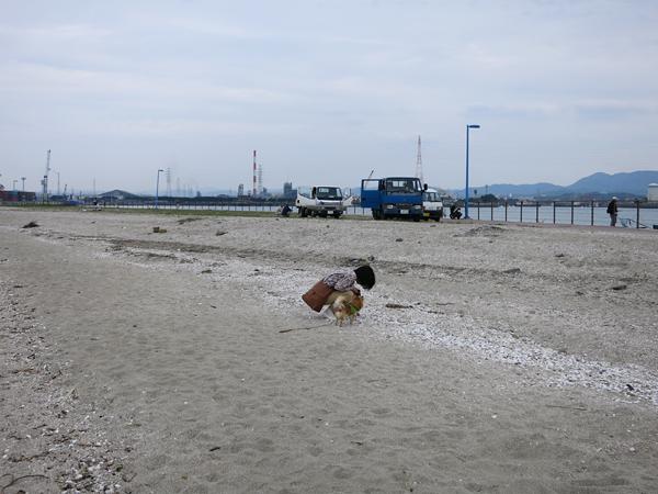 三池海水浴場 茶太郎 ビーチコーミング