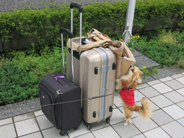 福岡空港 茶太郎