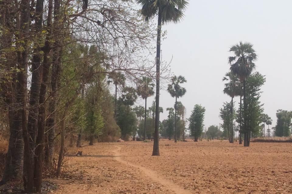 チャウンバードウ村掘削地近辺の畑