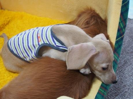 つばさ枕1