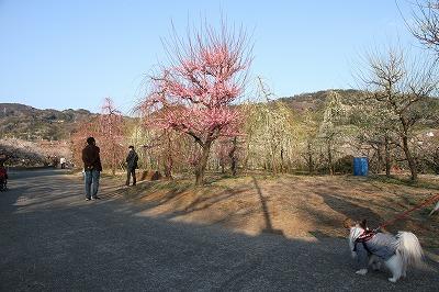 kana_20140222_06.jpg