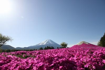 yamanashi_20140523_04.jpg