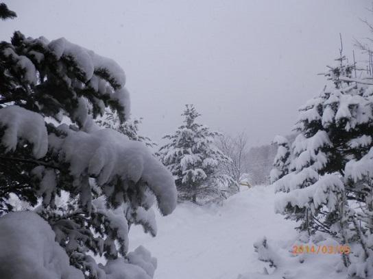 3/5 雪降りです。