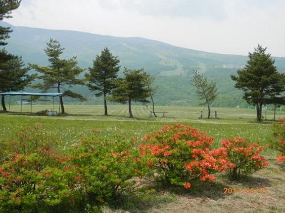 バラギ高原のツツジ