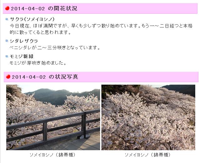 錦帯橋開花