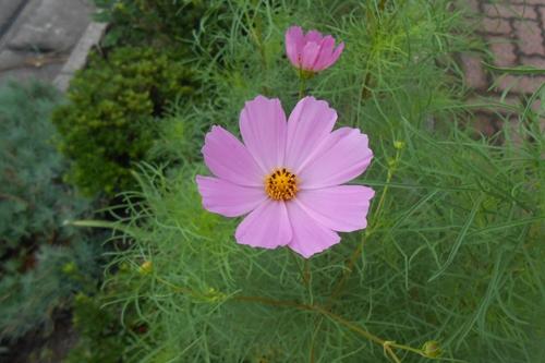 flower-20140830.jpg