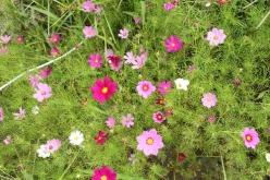 flower-20140901.jpg