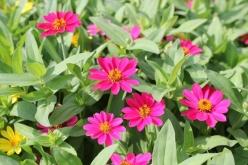 flower-20140903-01.jpg