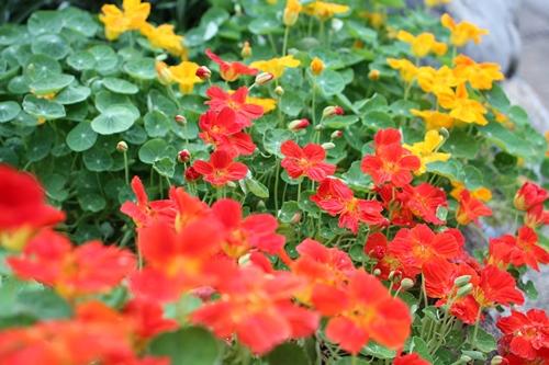 flower-20140906.jpg