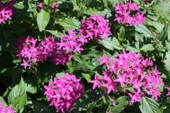 flower-20140928.jpg