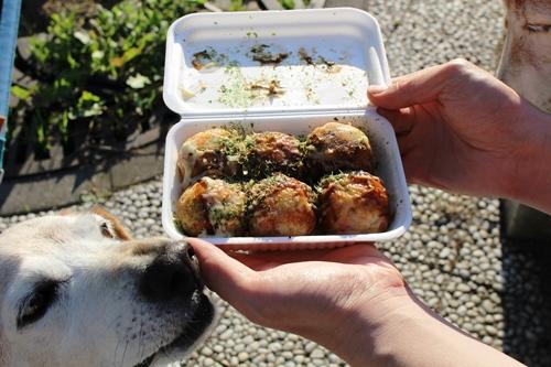 takoyaki-20141009.jpg