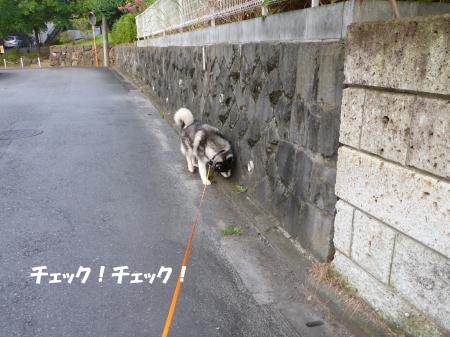 20140822_2.jpg