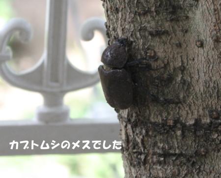 20140827_4.jpg
