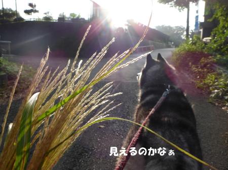 20140908_2.jpg