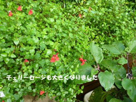 20140908_4.jpg