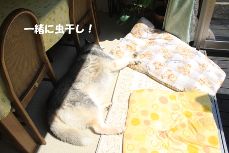 20140914_6.jpg