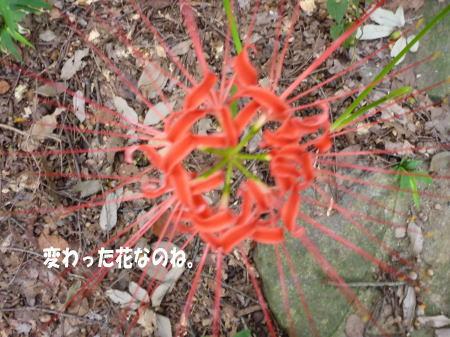 20140916_3.jpg