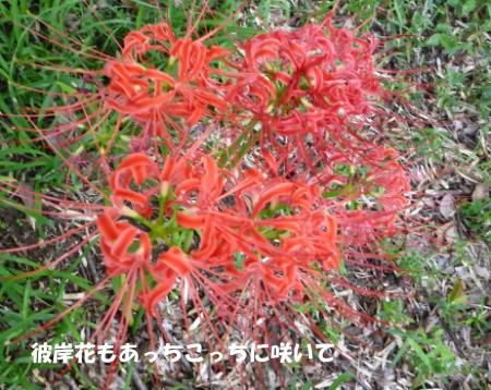 20140919_3.jpg