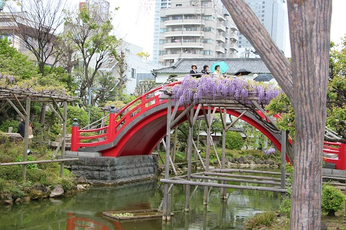 IMG_6109赤い橋と藤