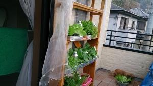 2014-04-05 ベランダ栽培棚の様子