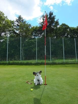 パピゴルフ