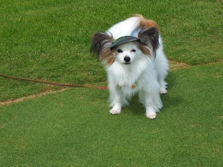 パピゴルフ1