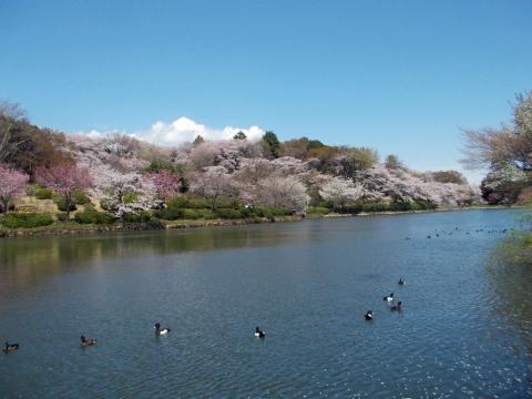 10三ッ池公園
