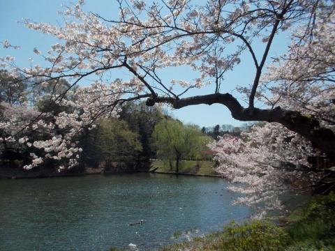 03三ッ池公園