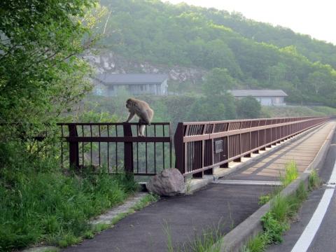 73不動沢橋のサル