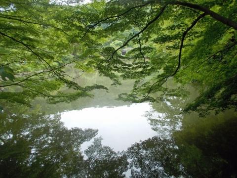 01薬師池公園