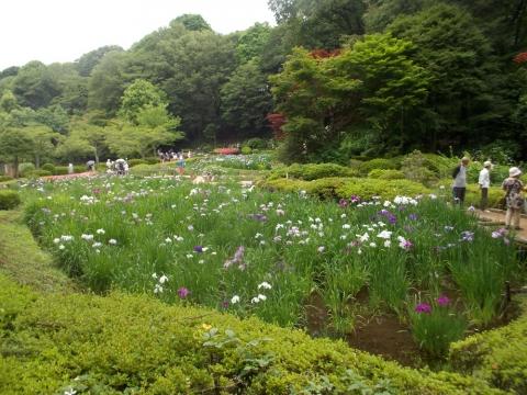 05薬師池公園