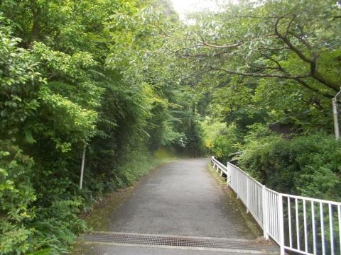 09日向林道へ1