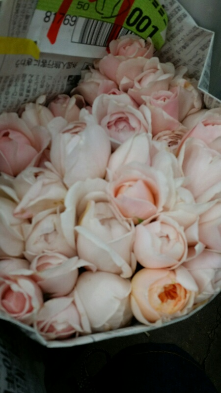 rose14082802.jpg