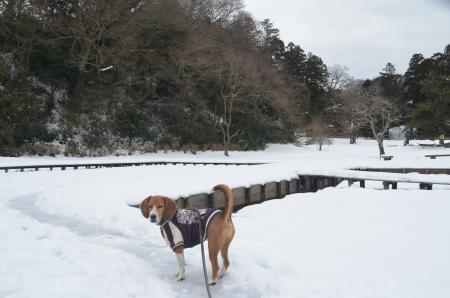 20140212佐倉城址公園02