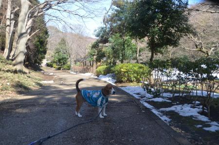 20140216花島公園04