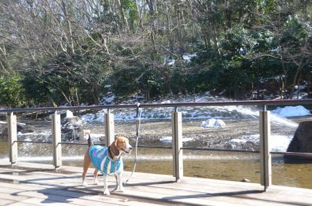 20140216花島公園05