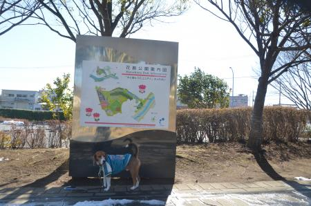 20140216花島公園02