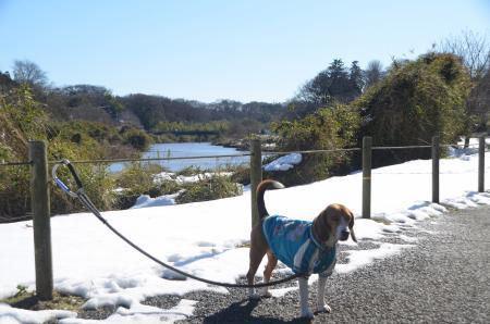 20140216花島公園18
