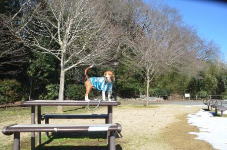 20140216花島公園16