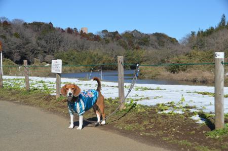 20140216花島公園15