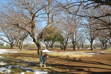 20140216花島公園31